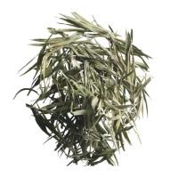 101. bamboo tee kräutertee