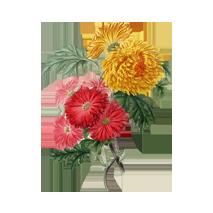 shuyao_zutat_blueten_chrysantheme_web_213x213
