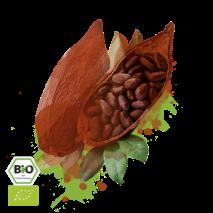 kakaobohne (schale, kern)