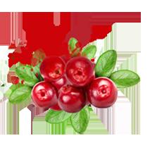 shuyao_zutat_fruechte_cranberry_web_213x213