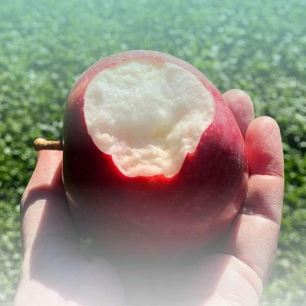 veggie apple crunch bio snack