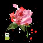 rose-150x150