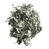 106. stevia tee kräutertee