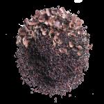 cacao earl grey