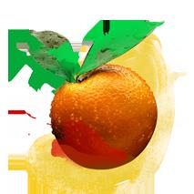 shuyao_zutat_fruechte_orangenschale_web_213x213