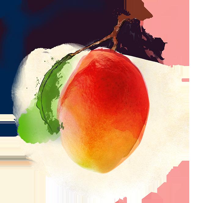 zutat_shuyao-tee-komposition_zutat_fruechtetee_mango