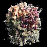 pomegranate-mint