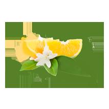 shuyao_zutat_blueten_orangenbluete_web_213x213