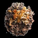 cacao macia